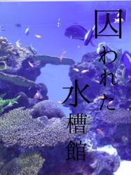 【完】囚われた水槽館~三人の御曹司からの甘美な誘愛~