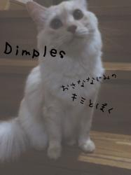 【完】Dimples 幼馴染のキミと僕