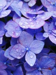 雨に恋した華
