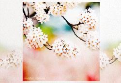 恋、花びらに舞う