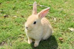 強がりウサギの不器用な恋