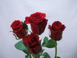 初恋の君に真紅の薔薇の花束を・・・
